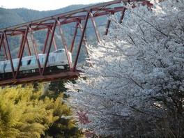 わち山野草の森の桜 画像(4/4)