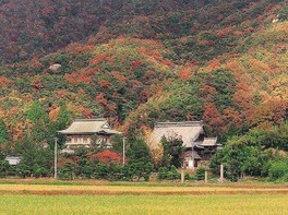大原山・西福寺の紅葉 画像(2/2)