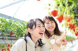 美作農園 いちご狩り 画像(2/5)