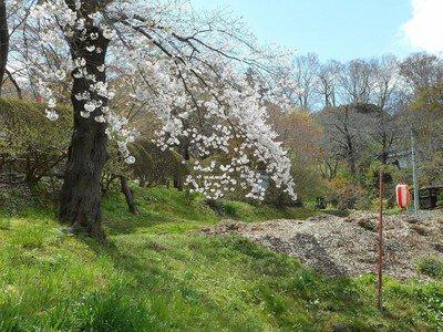 釣山公園の桜