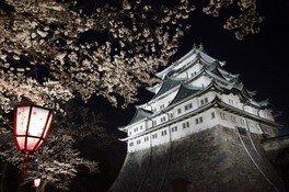 名古屋城の桜 画像(2/2)