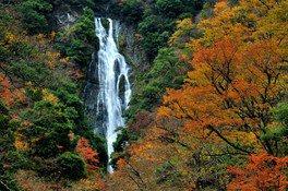 神庭の滝自然公園の紅葉 画像(2/2)