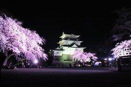 小田原城址公園の桜 画像(2/3)