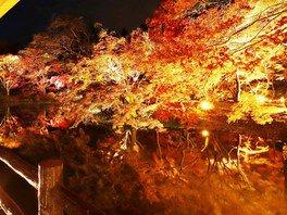 京都府立植物園の紅葉 画像(2/3)