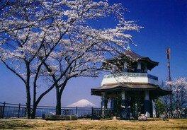 弘法山公園の桜 画像(3/3)