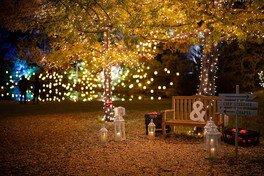 ガーデンイルミネーション2020-2021 ~ランタンが灯る、ひかりの森~ 画像(4/5)