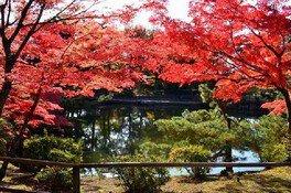 須賀川牡丹園の紅葉 画像(2/5)