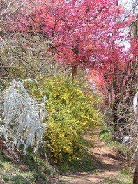 色とりどりの花々(花見山)