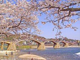 錦帯橋の桜 画像(2/3)