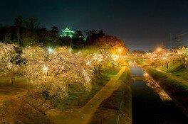 岡崎公園の桜 画像(3/5)