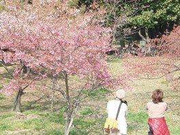 住之江公園の桜 画像(2/5)