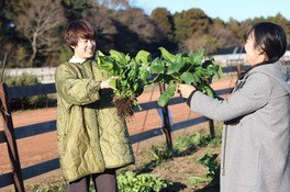 旬野菜の収穫体験も実施