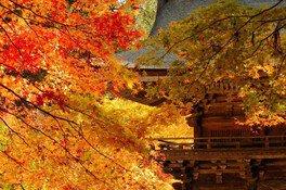 大矢田神社もみじ谷の紅葉 画像(2/3)