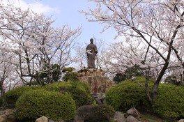 日和山公園の桜 画像(2/2)