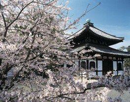 阿弥陀堂とソメイヨシノなど見どころ多数