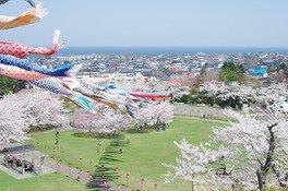 愛宕公園の桜 画像(4/4)