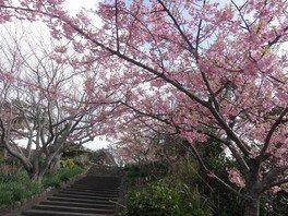 官軍塚の桜 画像(2/4)