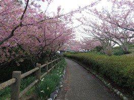 官軍塚の桜 画像(3/4)