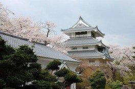 三戸城跡・城山公園の桜 画像(3/3)