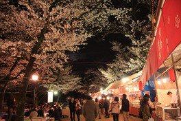亥鼻公園の桜 画像(2/3)