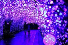 湘南の宝石~江の島を彩る光と色の祭典~ 画像(3/5)
