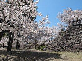 松代城跡の桜 画像(4/4)