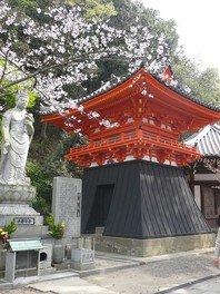 紀三井寺の桜 画像(5/5)