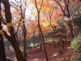 摂津峡公園の紅葉 画像(2/2)
