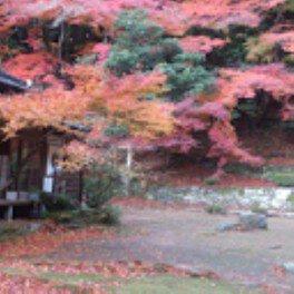 国指定名勝庭園藤江氏魚楽園の紅葉 画像(2/3)