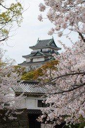 和歌山城の桜 画像(2/5)