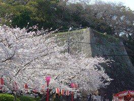 和歌山城の桜 画像(4/5)