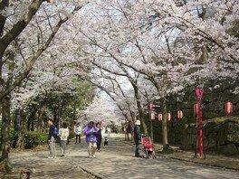和歌山城の桜 画像(5/5)