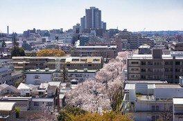 中央通りの桜 画像(3/5)