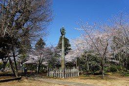西蓮寺の桜 画像(2/5)