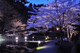 霞ヶ城公園の桜 画像(2/4)