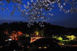 霞ヶ城公園の桜 画像(4/4)