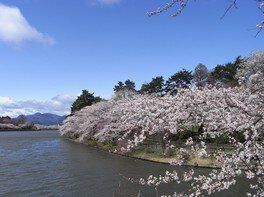 高松公園の桜 画像(2/2)