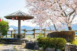 王子山公園の桜 画像(2/2)