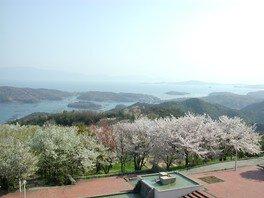 岡山いこいの村周辺の桜 画像(2/2)