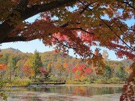 湖に映える紅葉も見所