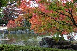 桜山公園の紅葉 画像(2/3)