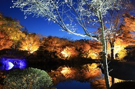 桜山公園の紅葉 画像(4/5)