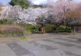 眉山公園の桜 画像(2/2)