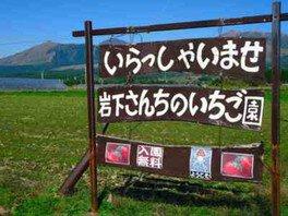 南阿蘇岩下さんちのいちご園 いちご狩り 画像(2/2)