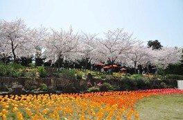 境内をぐるりと取り囲むように桜が咲く