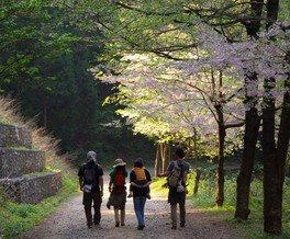 桜公園の桜 画像(2/2)