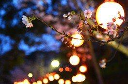 垣生公園の桜 画像(2/2)