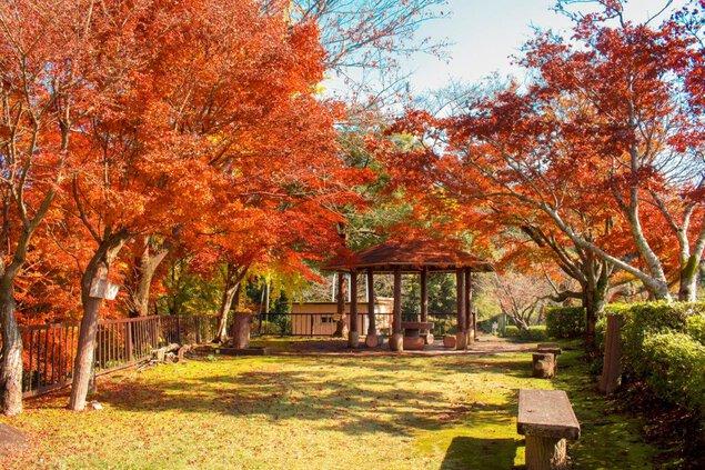 舞鶴城公園の紅葉 画像(2/2)