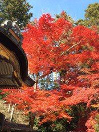 鍬山神社の紅葉 画像(3/4)