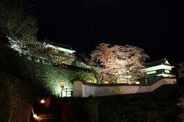 臼杵城址の桜 画像(2/4)